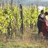 Sposi – Ritratto in Vigna